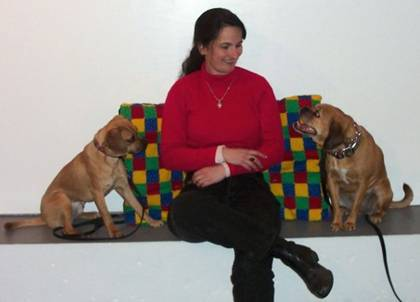 Puggle dog training in Derry NH and Tewksbury MA