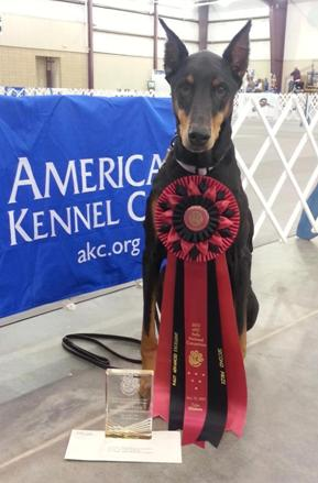 Photo: Megatons of congratulations to Paige Kendall and Gracie, who just took 2nd place at the AKC Rally Nationals in Oklahoma! A wonderful accomplishment based on over 9 years of training, trust and partnership. I am SO VERY PROUD of you guys! (Now THAT is a freakin' rosette!)