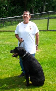Dog training for Giant Schnauzers in North hampton NH on the seacoast
