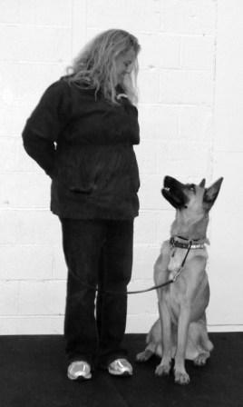 Belgan Malinois dog training with Fortunate K9