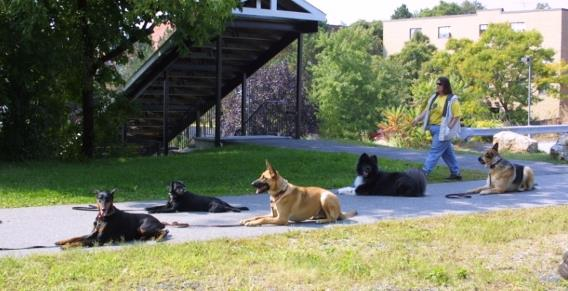 Fortunate K9 Dog and Owner Training - Group Training Class